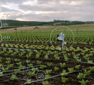 AI in Agriculture Sector
